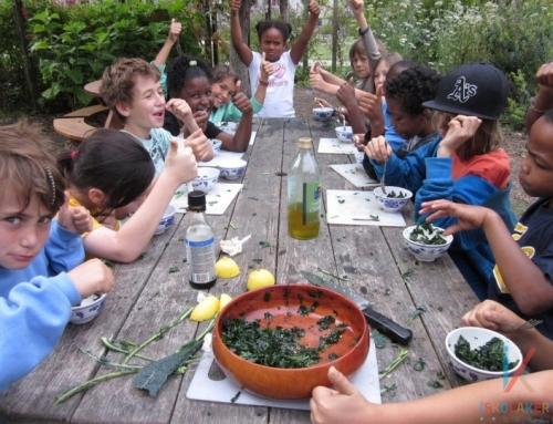 Alapítsunk iskolakertet! – tervezési segédlet lépésről lépésre 1. rész