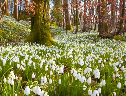 A tavasz várva-várt hírnöke