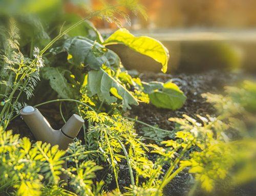 Ingyenes talajszenzor igénylés iskolakerteknek